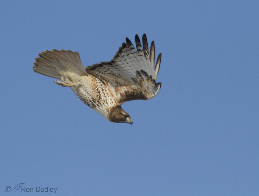 2000, f/8, ISO 500, Canon 7D, 100-400 @ 400mm, wire removed, not