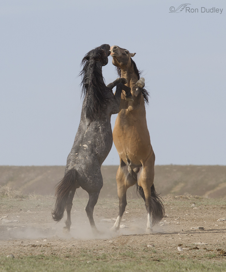 ... Matching Query Horse Mating This Video Horse Woman Mating Https Groups