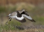 willet 9963 ron dudley
