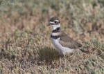 killdeer 9999b ron dudley